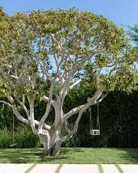 Backyard Tree Ideas Tree Swing Photos Design Ideas Remodel And Decor Lonny