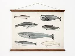 whales poster a3 canvas handmade vintage inspired educational