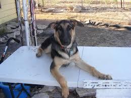 diy dog grooming table has anyone built a grooming table german shepherd dog forums