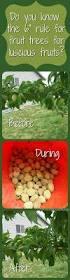 best 25 espalier fruit trees ideas on pinterest fruit trees