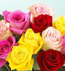 color roses west florist 1 dozen mixed color medium stem roses