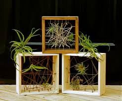 Air Plants String Art With Air Plants Bedner U0027s Farm And Greenhouse