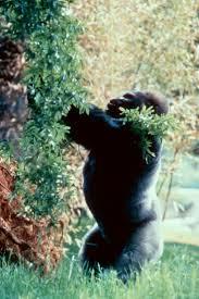 30 best zoo atlanta images on pinterest atlanta animals and zoos