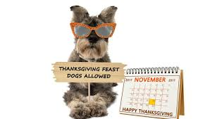 top thanksgiving safety tips for pet owners for this