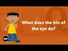 what does the iris of the eye do