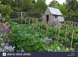 an allotment shed in vegetable garden at the royal horticultural