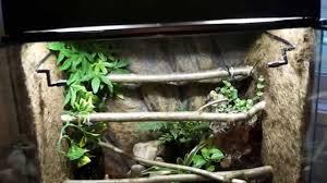 bioactive setup for green tree python