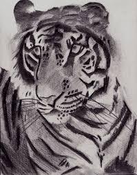 bbc blast art u0026 design tiger sketch