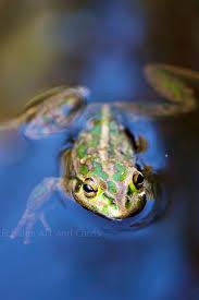 frog print frog decor 12x16 nature print blue green wall
