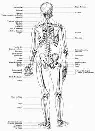 Human Anatomy Diagram Download Whole Body Diagram Anatomy Organ