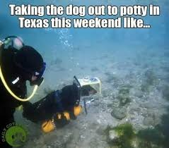 Texas Meme - taking the dog out to potty in texas funny memes daily lol pics