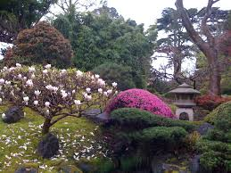 Botanical Gardens Golden Gate Park by Japanese Tea Garden In Full Bloom Golden Gate Park Views From