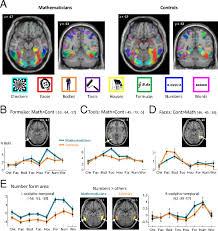 credit foncier si e social origins of the brain networks for advanced mathematics in expert