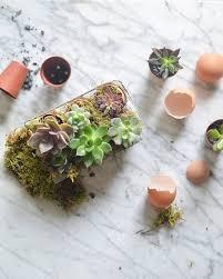 best 25 common house plants ideas on pinterest house plant care