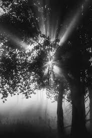 landscapes sidney blake photography foggy black and white autumn