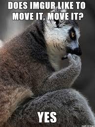 Lemur Meme - let s ask lemur meme meme on imgur