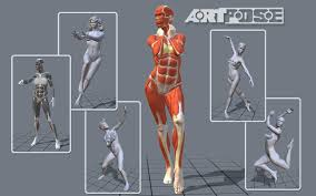 Female Muscles Anatomy Artpose Female Edition Android Apps On Google Play