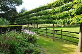 Fruit Tree Garden Layout Espalier Trees For Every Garden Garden Design