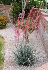 25 unique arizona landscaping ideas on pinterest low water