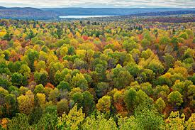 colourful tree tops in an autumn forest stock photo image 44038768