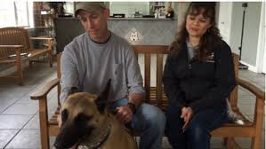 belgian malinois in movies benno the belgian malinois ate 23 rounds of live ammo