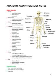 Anatomy And Physiology Nervous System Study Guide College Anatomy And Physiology Notes Anatomy And Physiology 2