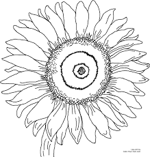 sunflower coloring page getcoloringpages com