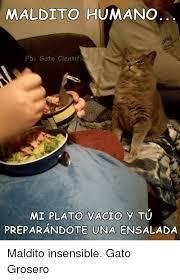 imagenes groseras de gatos maldito humano fb gato cientifico mi plato vacio y tu preparandote