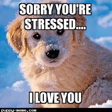 Stress Meme - 1446494786977 png