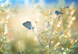 Beautiful Plants by Field With Butterfly And Bokeh Sky And Beautiful Plants Stock