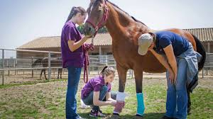 veterinary technology degree program orange county