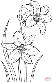 narcissus coloring page free printable coloring pages
