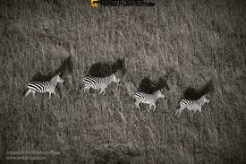 top 25 photographs from the wilderness 11 u2013 national geographic