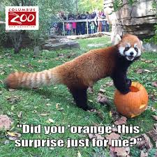 help us make boo at the zoo 2017 even columbus zoo and