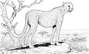 cheetah in nature animal hard coloring pages printable