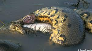 vidio film ular anaconda september 2011