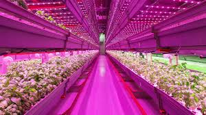 why chicago is becoming the country u0027s urban farming cap fast company