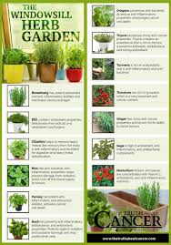 14 cancer fighting plants for your indoor herb garden indoor