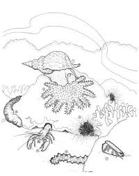 coral coloring pages printable coloring templates u2013 barriee