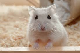 name ideas for your hamster