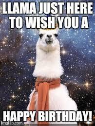 happy birthday alpaca blank template imgflip