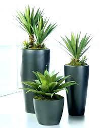 low light indoor trees best indoor trees low light office plants low light best lighted