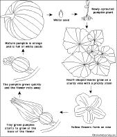 plant printouts enchantedlearning com