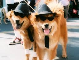 Halloween Costumes Dogs Cutest Puppy Costumes 2011 Cutest Pet Halloween Costumes Luxury Spot
