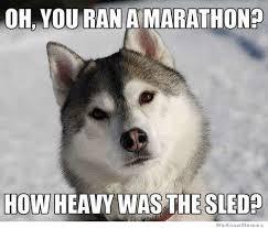 Husky Meme - condescending husky weknowmemes