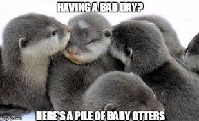 Having A Bad Day Meme - image tagged in pile of otters memes cute having a bad day baby