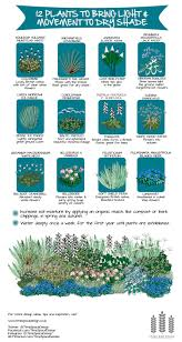 native british plants 12 plants to bring movement and light to dry shade u2014 time and