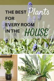 Decorative Plants For Home Best 20 Indoor House Plants Ideas On Pinterest Low Light