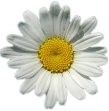 daisy chains love story pinterest daisy chain and image search