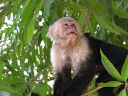 bentley orangutan the leakey foundation primate tales the story of moth a white